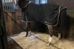 Miscanthus-Häcksel als Einstreu in einer Pferdebox