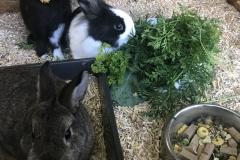 Miscanthus-Häcksel als Einstreu in einer Kaninchen-Voliere