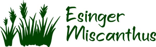 Esinger Miscanthus